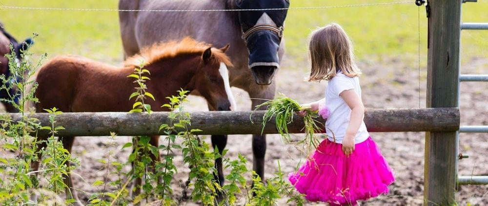 Little girl feeding baby horse on ranch